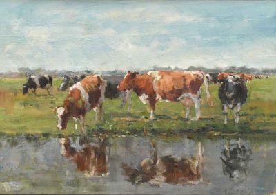 Spiegelende koeien