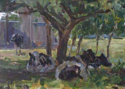 Koeien in de boomgaard